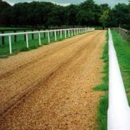 wood chips, horse gallops, equestrian surfaces carlow. animal bedding ireland.. equestrian products ireland